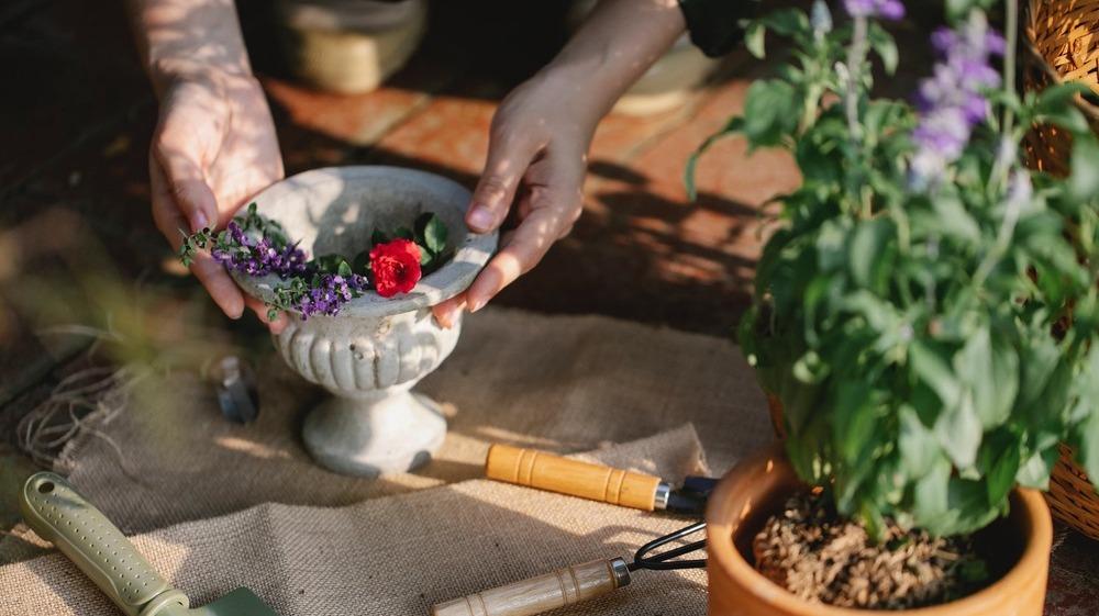 6 cosas que puedes sembrar en tu balcón